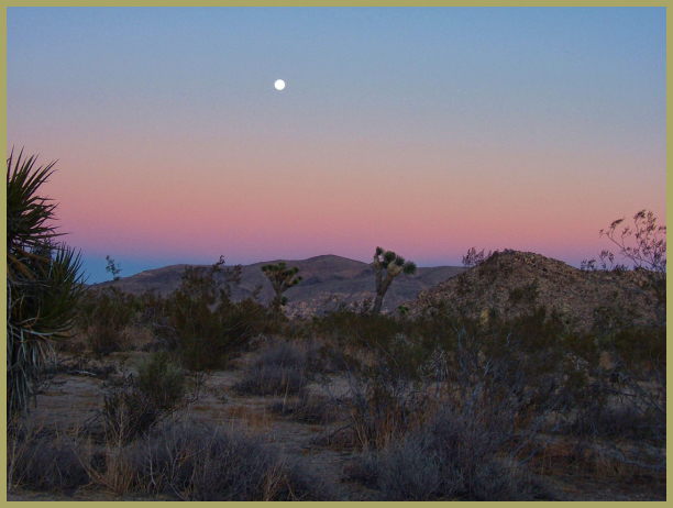 Joshua Tree N.P. on a Moonlit Night