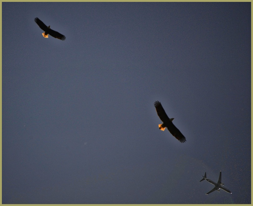 Eagle 1 - Eagle 2 - Alaska Air