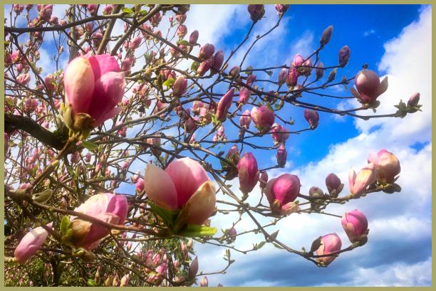 Magnolia Madness ; )