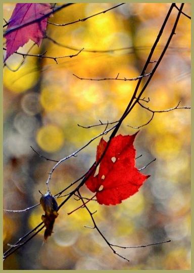 Well, OK - Autumn
