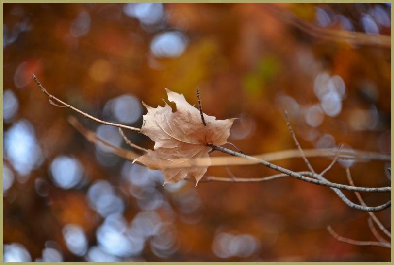 """Variation on a Theme"" II - Late Autumn"