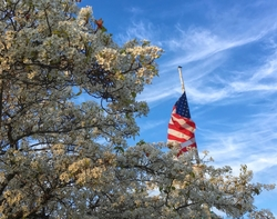 Postcards from Vallejo - #2 -  Old Glory