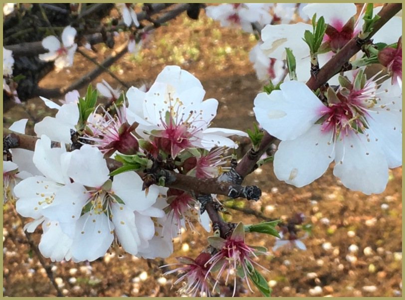 Early Evening - Spring Blossom