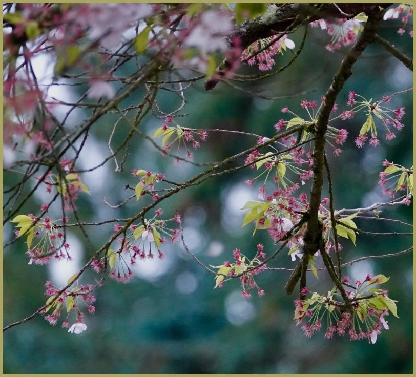 Blossoms in the Spotlight
