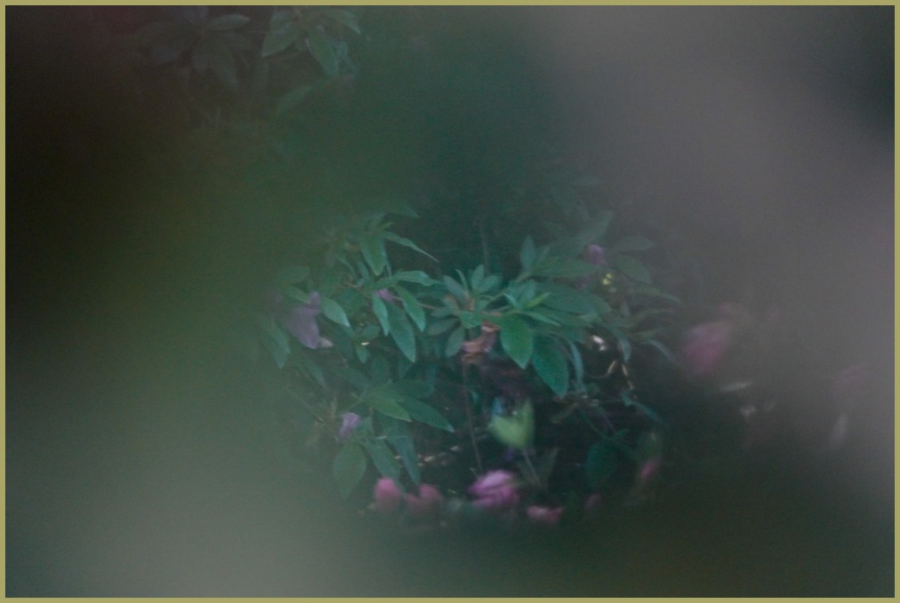"""True Friends - Finding Flowers in the Fog"""""""