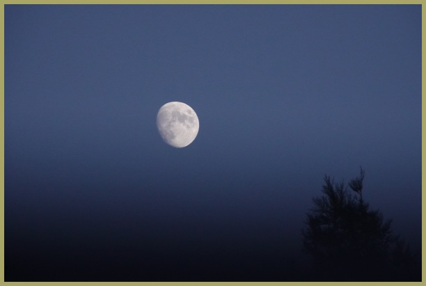 Buck Moon 2019