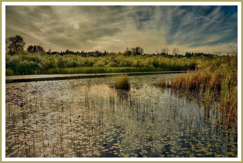 Swampland sunrise