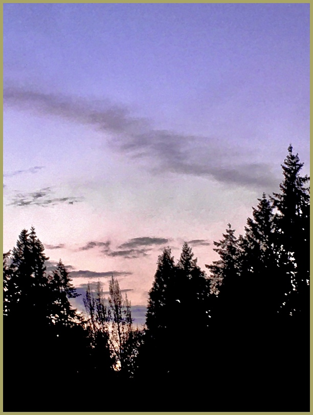 Sunset Colours through the Pines