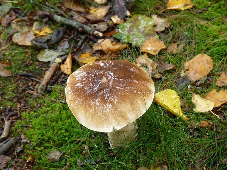 Brown beauty in wood