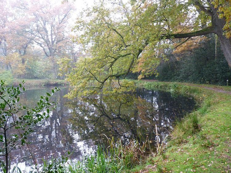 Walk by a lake