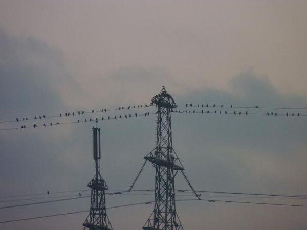 Birds finding rest
