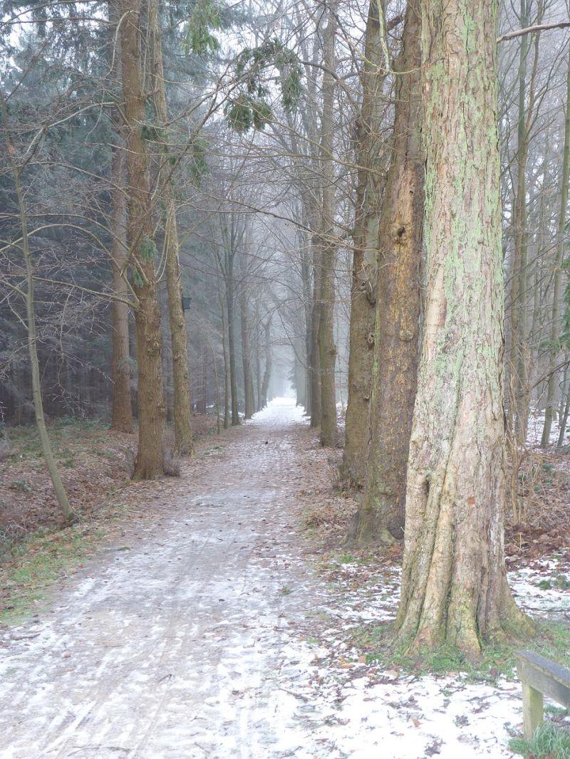 Endless Path