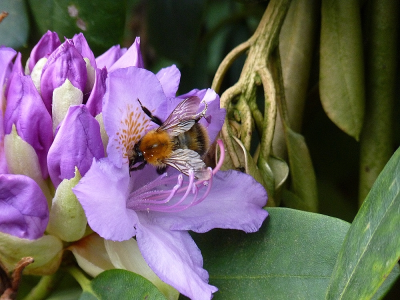 Bee on visite