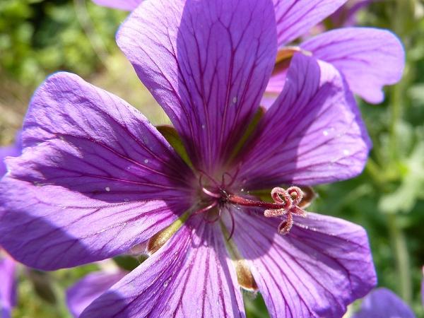Pleasure of Blooming