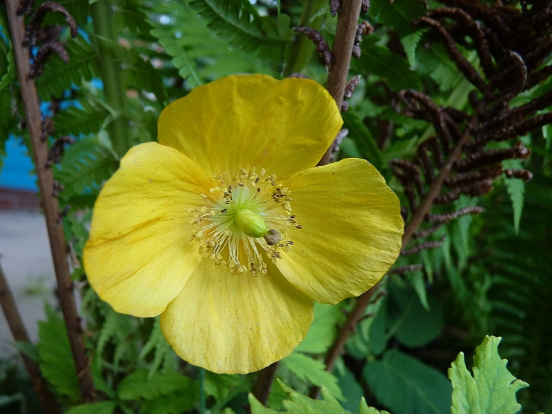 Wonder in Yellow