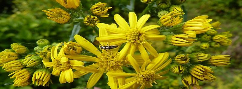 Flavour Flower
