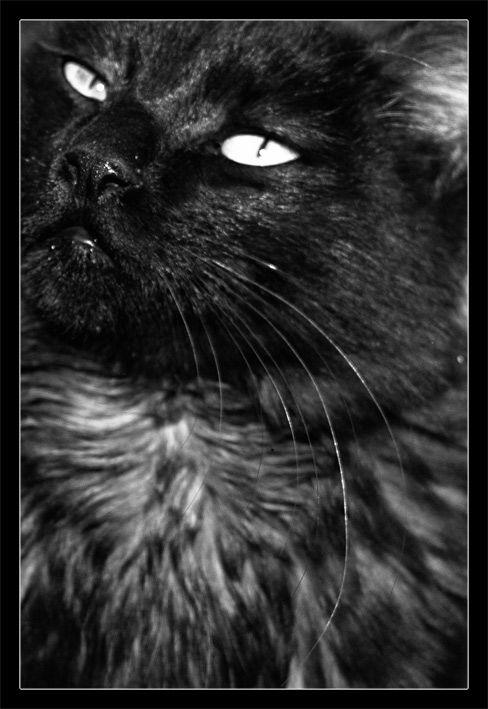 گربه 2