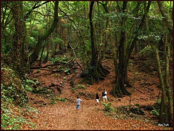 Paseo maravilloso // wonderfull walk