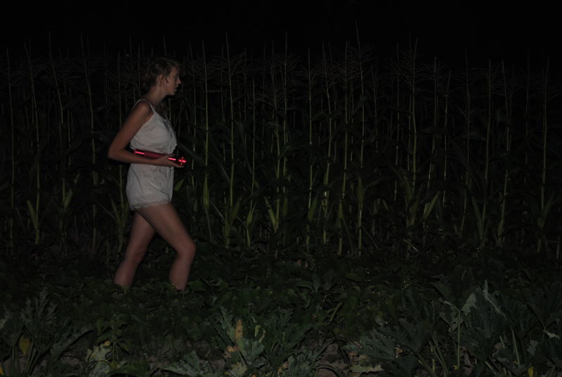 A March through the Cornfields