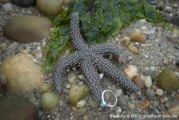 starfish ring beach