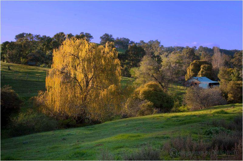 Ferguson Valley Cottage Tree