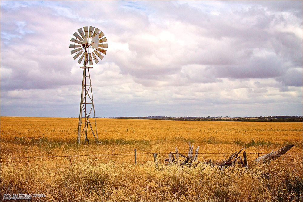 Windmill + ripening wheat crop by Craig White AUS