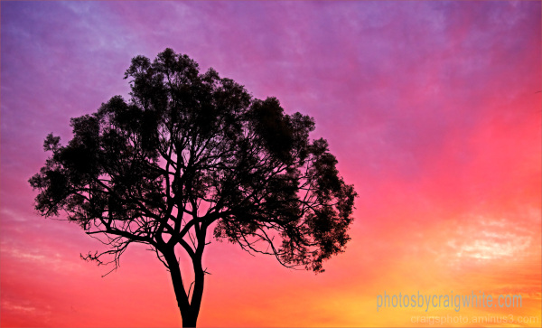 Sunrise Winter Australia by Craig White (AUS)