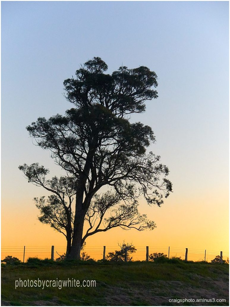 Tree at Sunrise in Australia by Craig White AUS