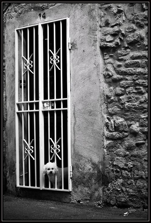 black and white dog portrait chien prison noir