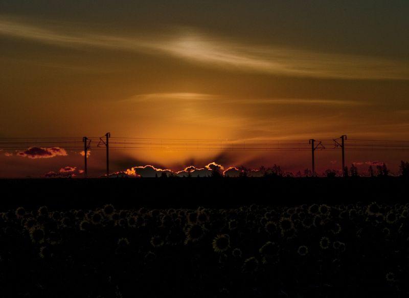 coucher de soleil sun night tournesol