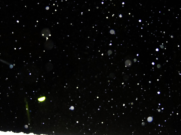 Snow, Night, Flash - 1
