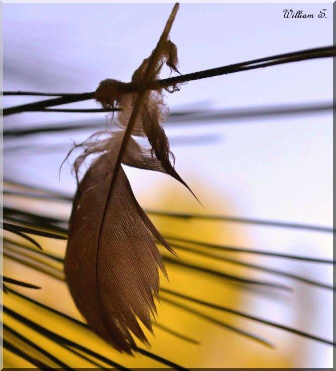 Il flotte comme un vent de liberté ♥♥♥