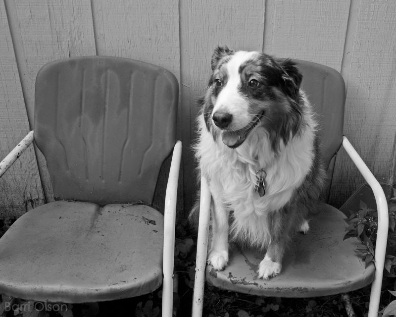 Dog on lawn chair