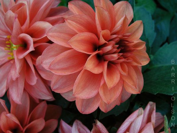 Autumn Flower #12