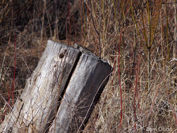 Stump on an Angle