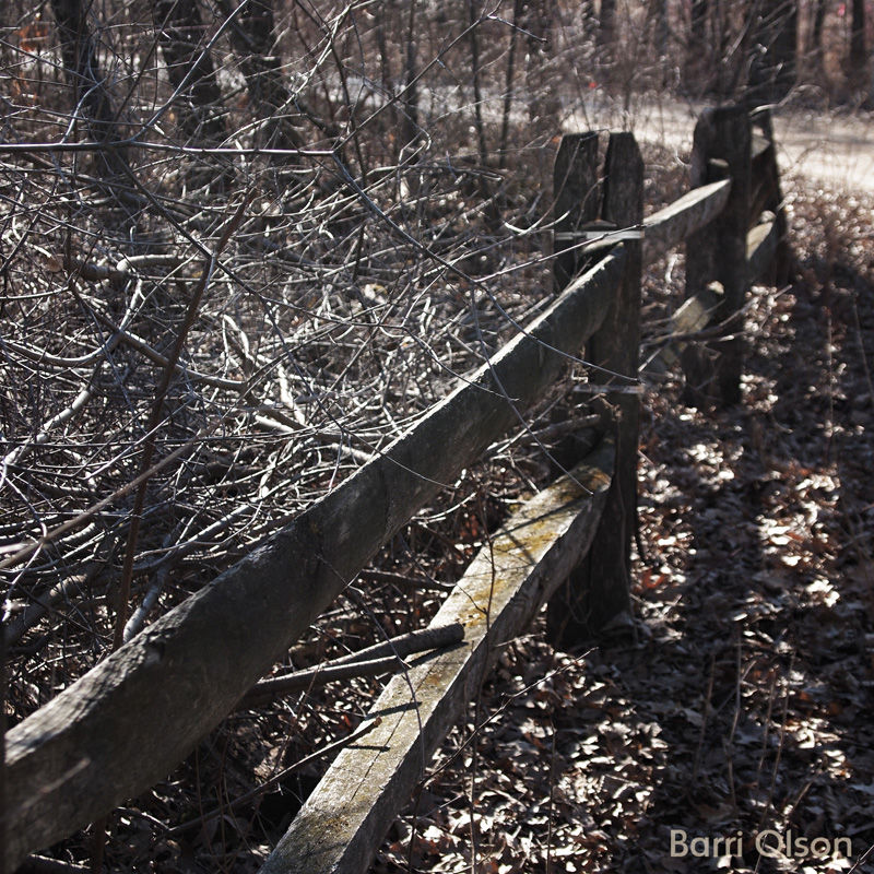 Fence and Entanglements