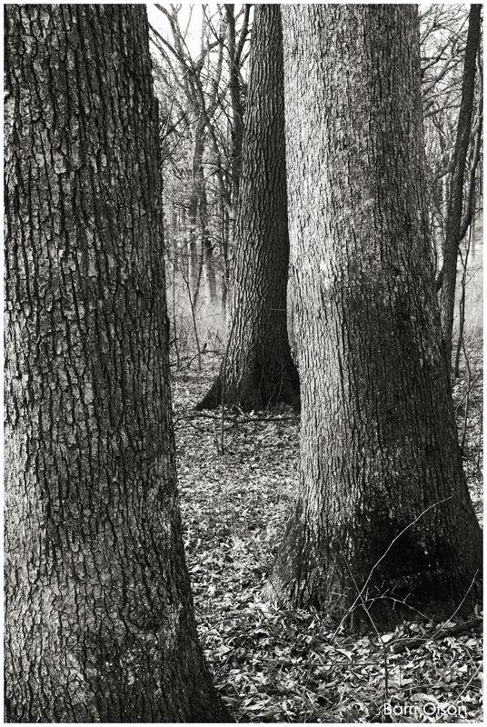 Trees #31
