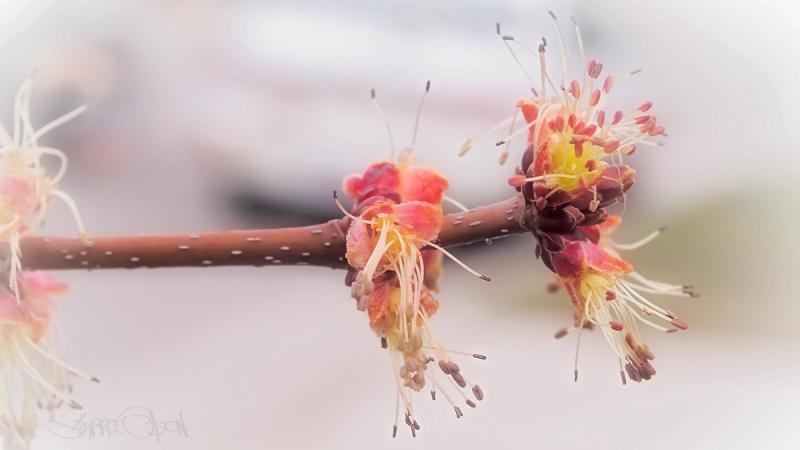 bloomin' bud