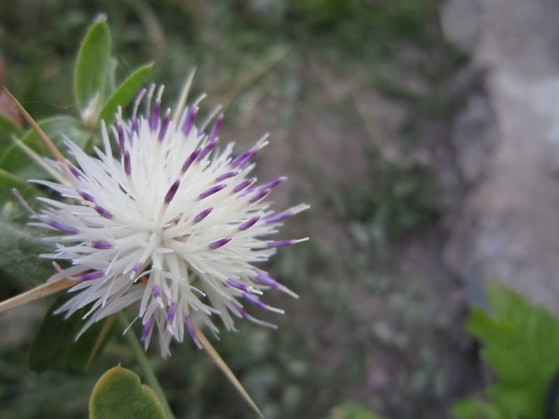Horror Flower