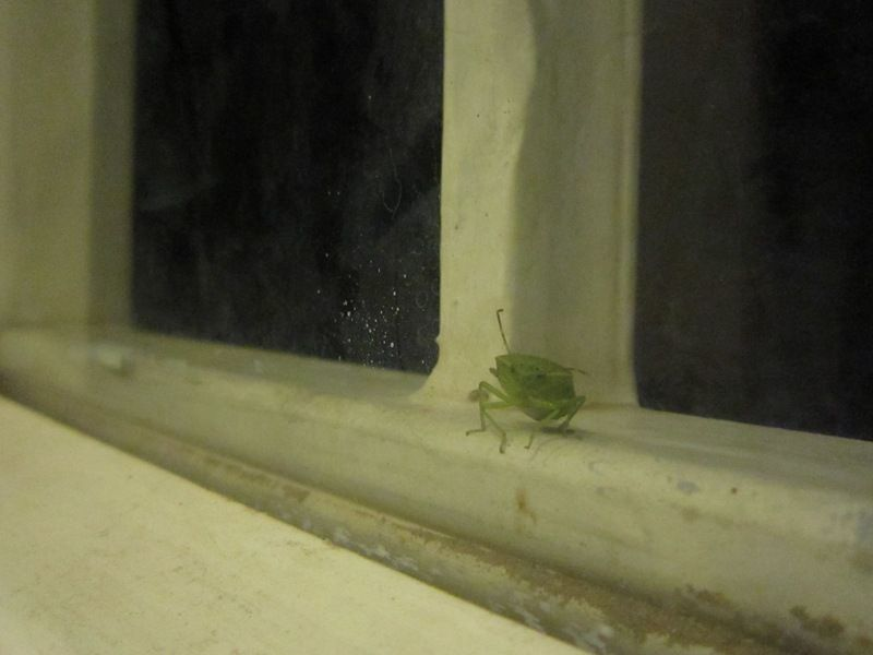 green insect
