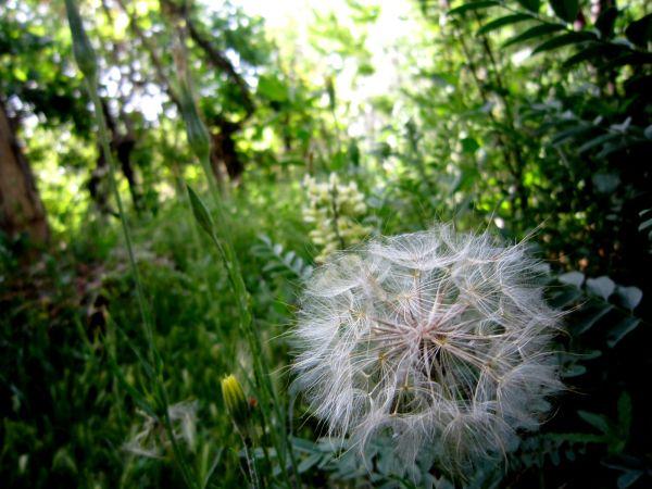 * flower