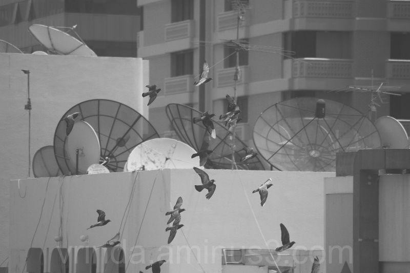 buildings, dish antennas and birds flying