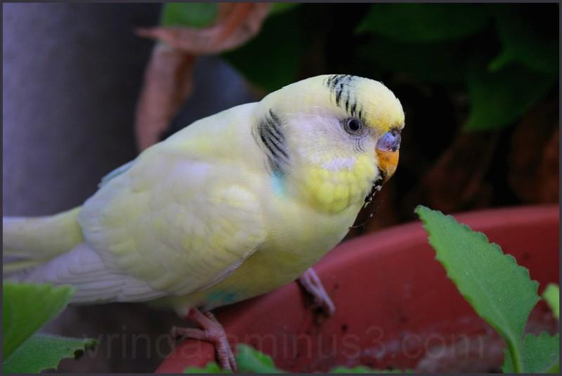 lovely lonely little bird