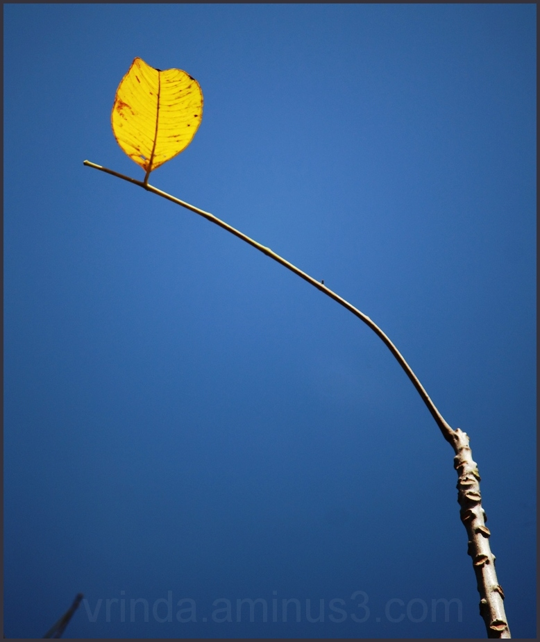 the last(ing) leaf