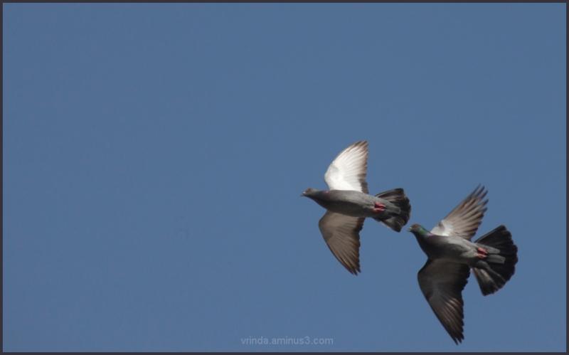 lets' fly together