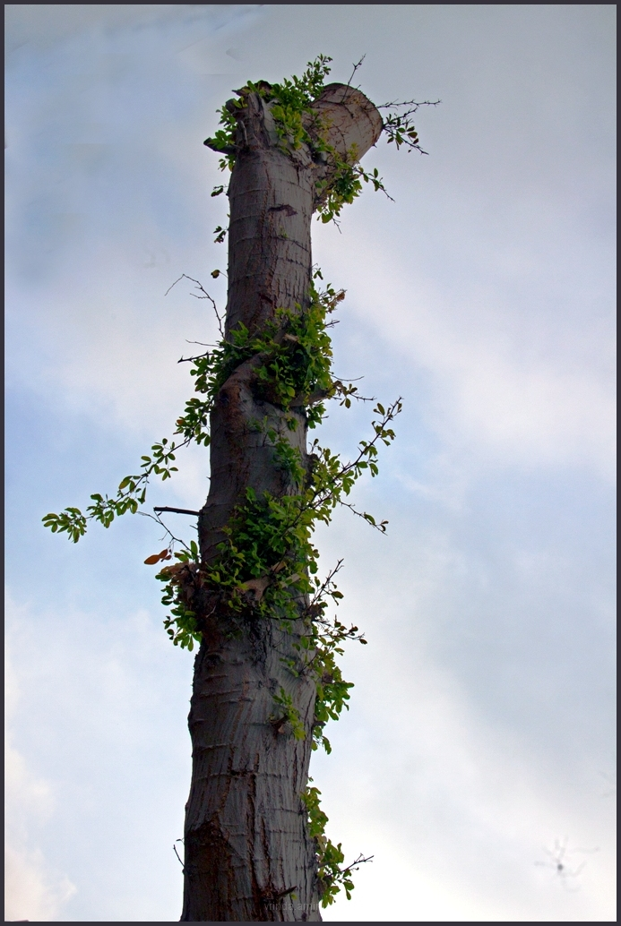 old tree,new life