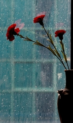 rain on my window pane