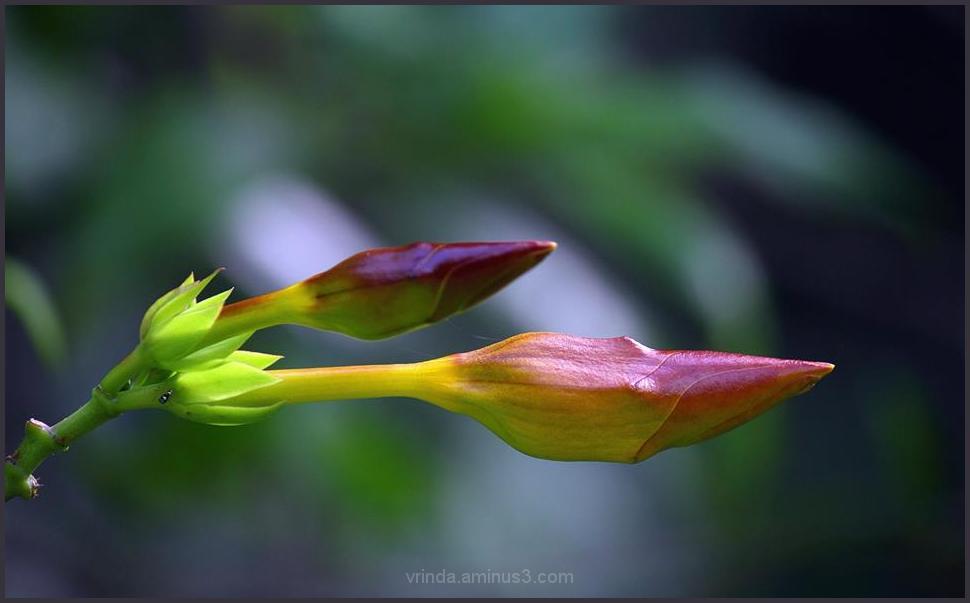 lets bloom together