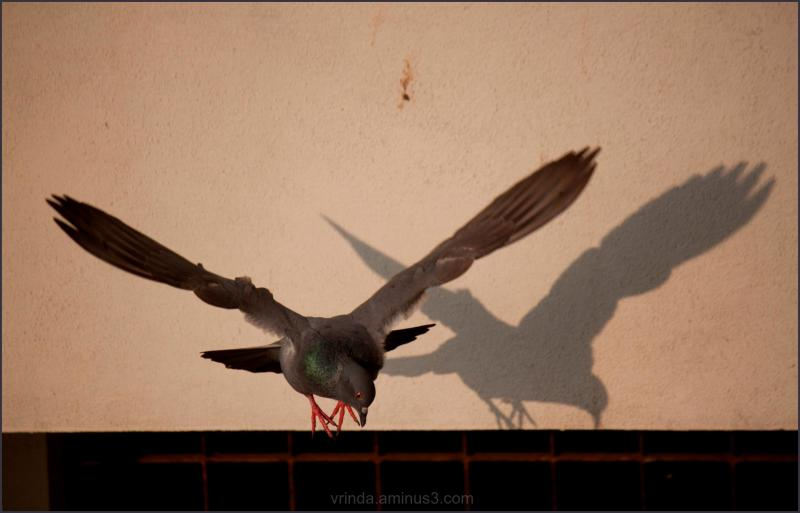 its my shadow