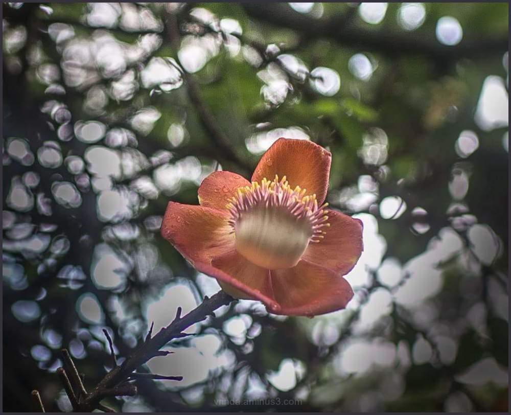 bloom bloom bloom